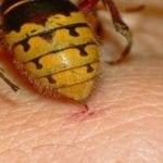 Почему укус пчелы дает эффект?