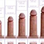 статистика размеров члена